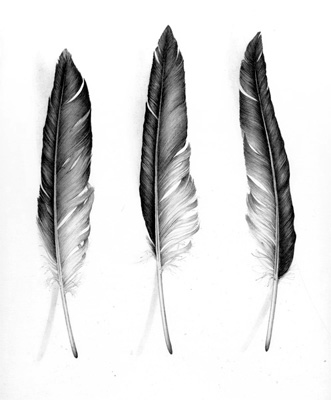 Cath Riley - miscellaneous:  feathers